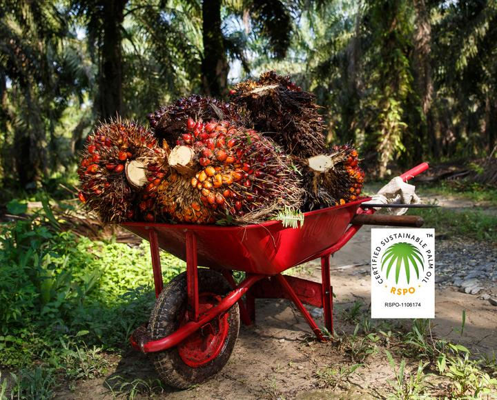Mitglied des Roundtable on Sustainable Palm Oil (RSPO)
